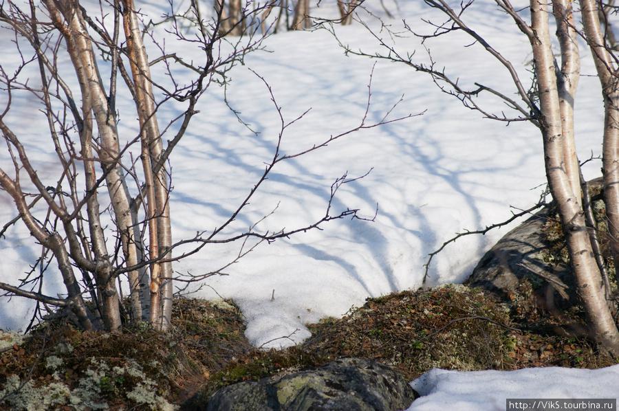 шторы пола фото весна в мурманске таким можно