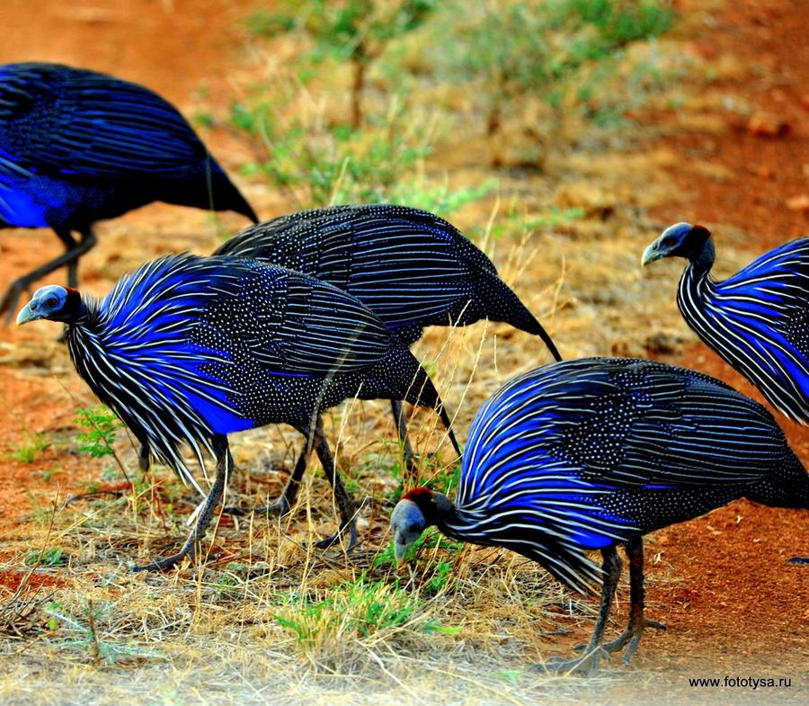 работе птицы африки названия и фото гардеробная